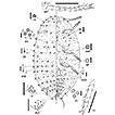 First records of the genus Pelionella ...