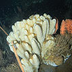 Porifera collection of the Italian National ...