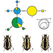 A DNA barcode library for ground beetles ...