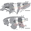 Revision of the lacewing genus Laccosmylus ...