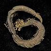 Timarete posteria, a new cirratulid species ...