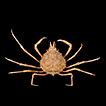 Three new species and a new genus of ...