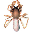 New data of spiders (Arachnida, Araneae) ...