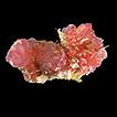 Checklist of ascidians (Chordata, Tunicata) ...