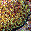 Annotated checklist for stony corals ...