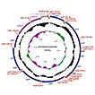 First mitochondrial genome from Yponomeutidae ...