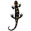 A new subspecies of African fire salamander ...