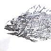 Fish rubbings, 'gyotaku', as a source of  ...