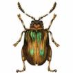 Moss inhabiting flea beetles of the West ...