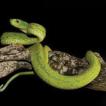 Selva Zoque, Mexico: an important Mesoamerican ...