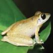 Amphibians of the equatorial seasonally ...