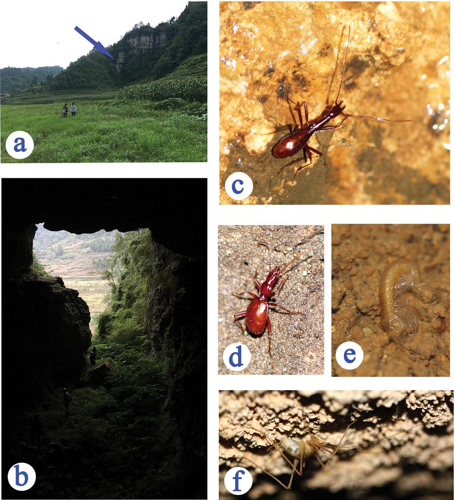 cavité souterraine définition
