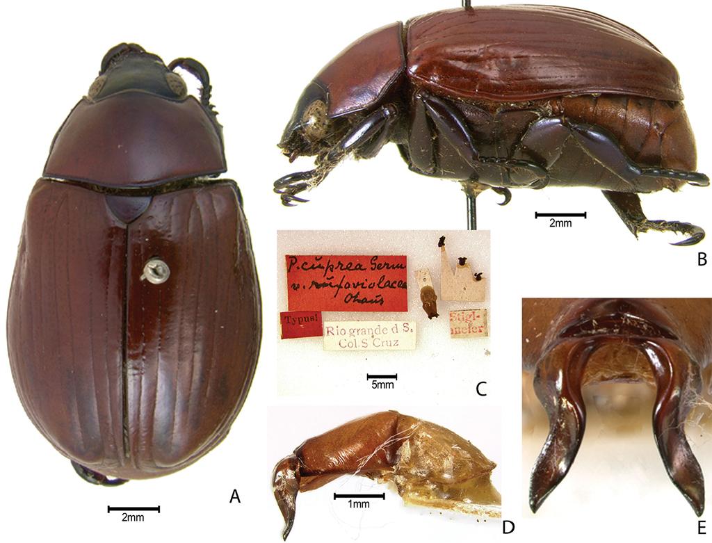 Synopsis of the pelidnotine scarabs (Coleoptera, Scarabaeidae