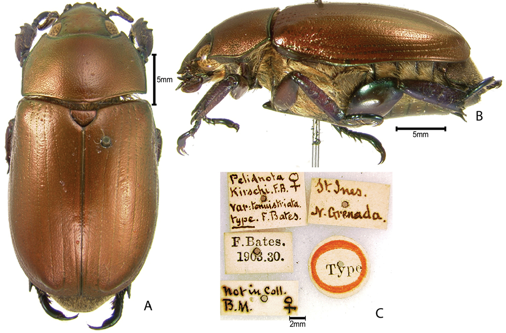 8c8f245f4e829 Synopsis of the pelidnotine scarabs (Coleoptera