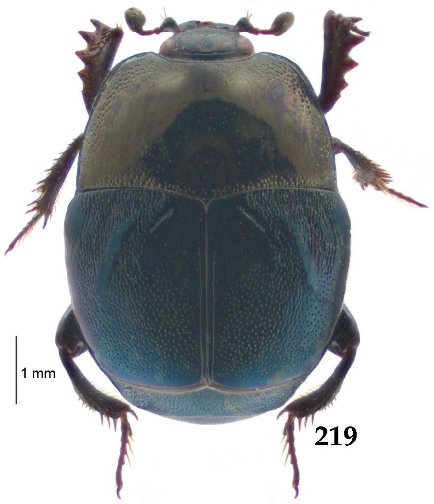A monograph of the Australopacific Saprininae (Coleoptera