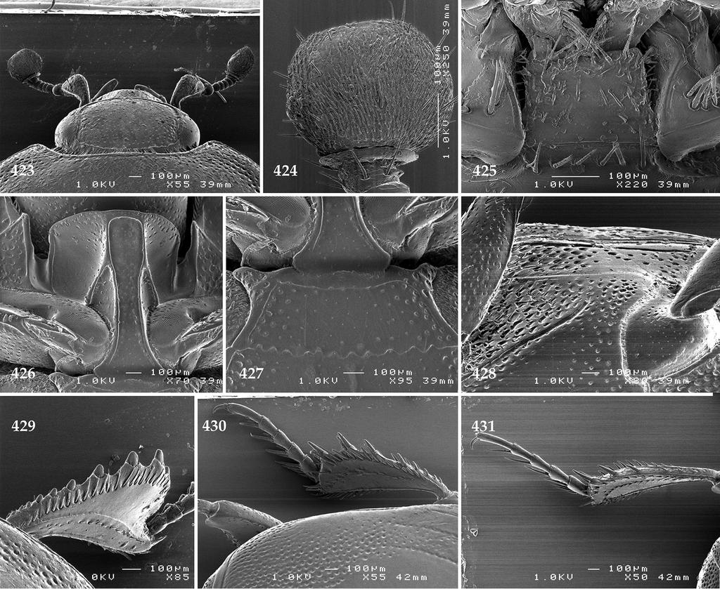 fd85e6abcf8 A monograph of the Australopacific Saprininae (Coleoptera, Histeridae)