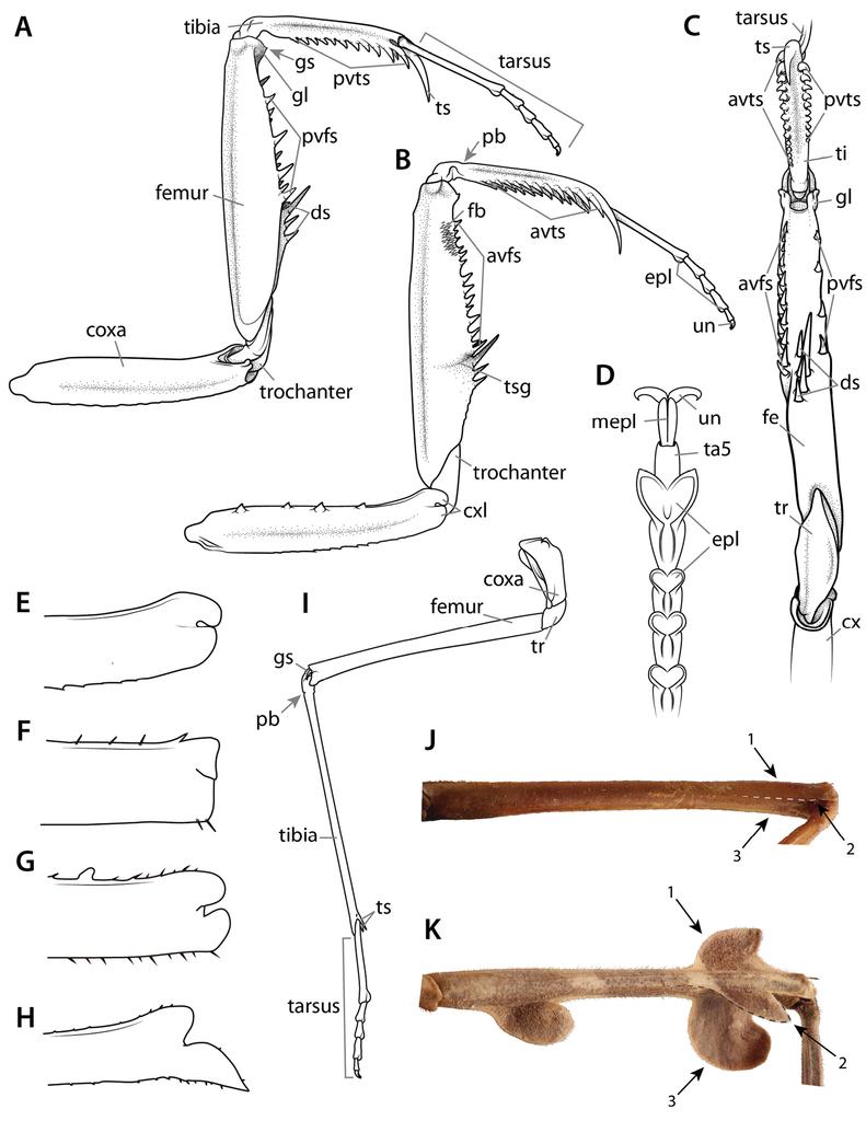 Manual of praying mantis morphology, nomenclature, and practices ...