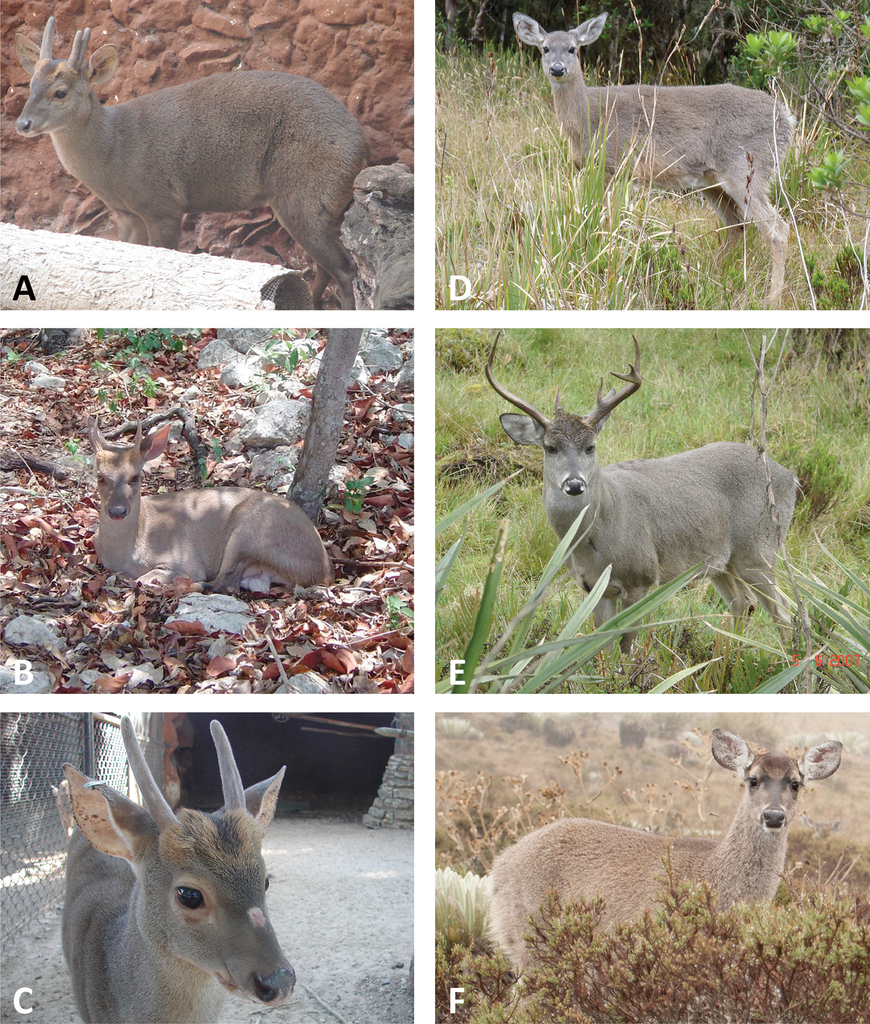 A gene tree test of the traditional taxonomy of american deer the figure 2 fandeluxe Choice Image