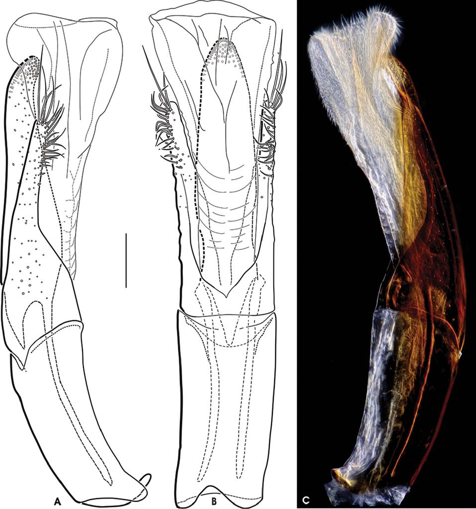 Niedlich Kleinz Anatomie Bilder - Anatomie Ideen - finotti.info