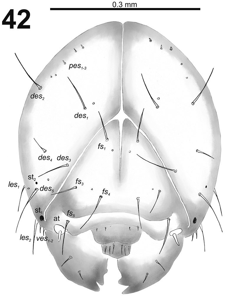 Morphological characters of immature stages of Palaearctic
