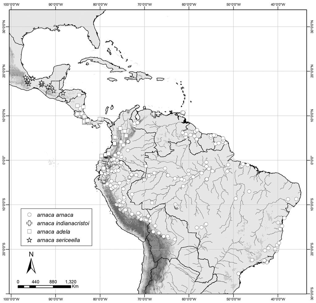 A revision of the new genus Amiga Nakahara, Willmott