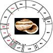 Two complete mitochondrial genomes from <i>Praticolella mexicana</i> Perez, 2011 (Polygyridae) and gene order evolution in Helicoidea (Mollusca, Gastropoda)