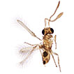 Two genera of Mymaridae (Hymenoptera) new to Africa, a remarkable new species of <i>Anaphes</i> and new generic synonymy