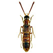 Two new species and new provincial records of aleocharine rove beetles from Newfoundland and Labrador, Canada (Coleoptera, Staphylinidae, Aleocharinae)