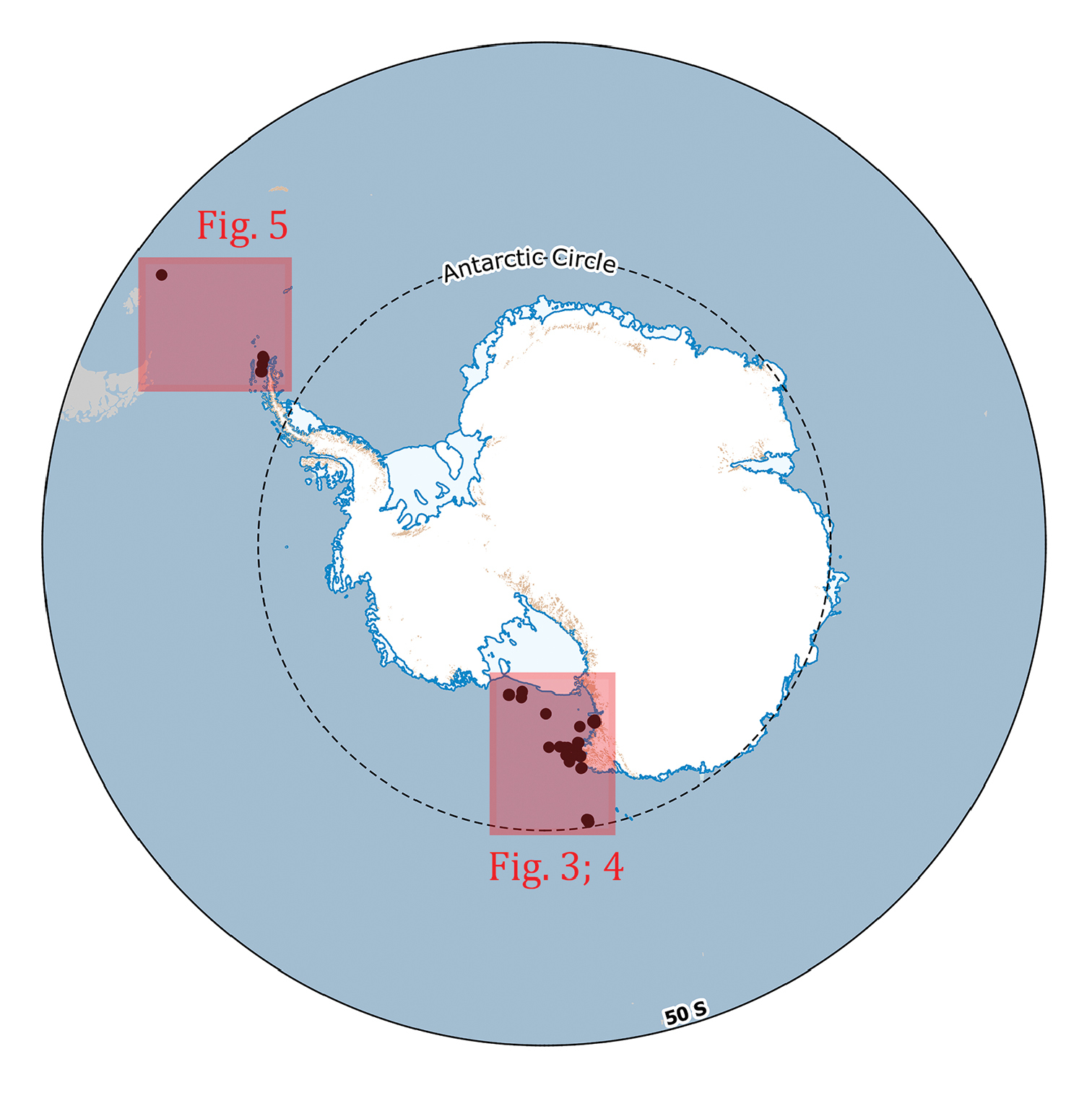 Distributional records of Antarctic and sub-Antarctic Ophiuroidea