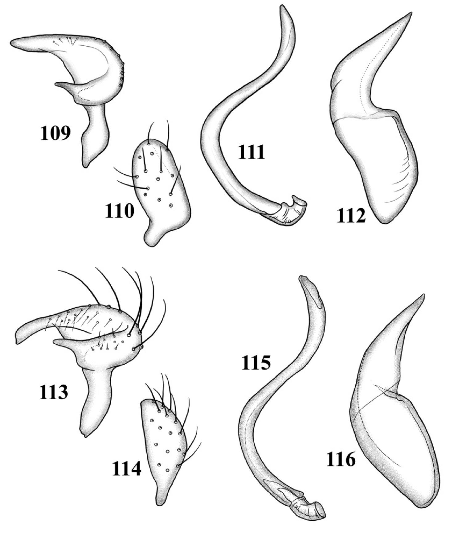 Revision of the Plant Bug Genus Tytthus (Hemiptera