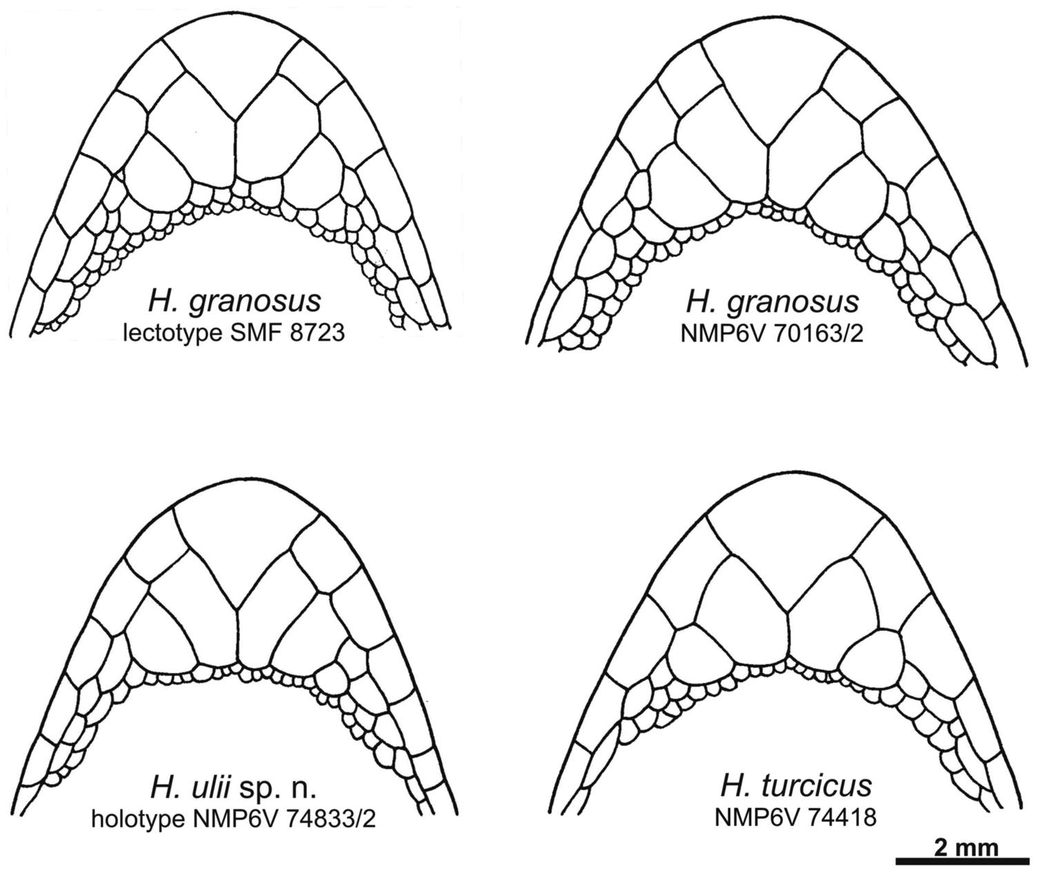 Two newly recognized species of Hemidactylus (Squamata, Gekkonidae